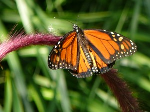 Butterfly by Eileen Chadnick --- freedom, transformation, beauty!